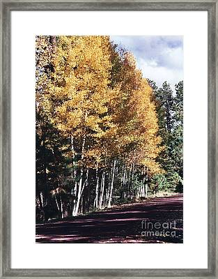 Framed Print featuring the photograph Colors Of Greer by Juls Adams