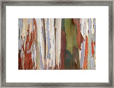 Colors Of Nature - Eucalyptus Tree Bark Abstract Framed Print by Gill Billington