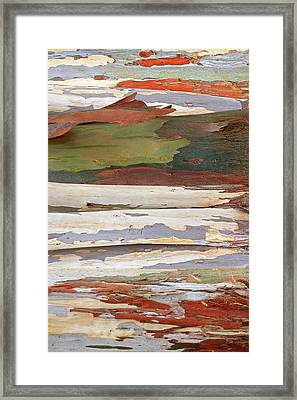 Colors Of Nature - Eucalyptus Tree Bark Abstract Vertical Framed Print by Gill Billington