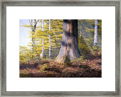 Colors Of Spring Framed Print by Conrad Mieschke
