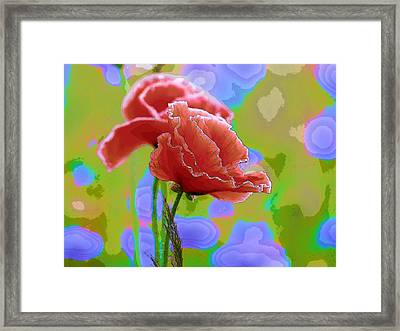 Colors Of Spring - Poppies 9 Framed Print by Celestial Images