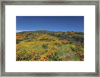 Framed Print featuring the photograph Colors Of Springtime by Cliff Wassmann