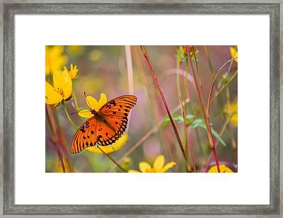 Colors Of Summer Framed Print by Parker Cunningham