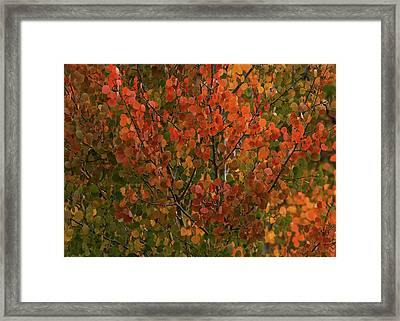 Colors Of The Aspen Framed Print by Ernie Echols