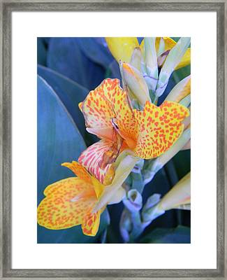 Colors Of The Canna Lily Framed Print by Warren Thompson