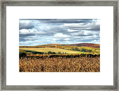 Colors Of The Field Framed Print