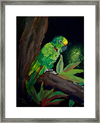 Colors Of The Parrot Framed Print by Michael Grubb
