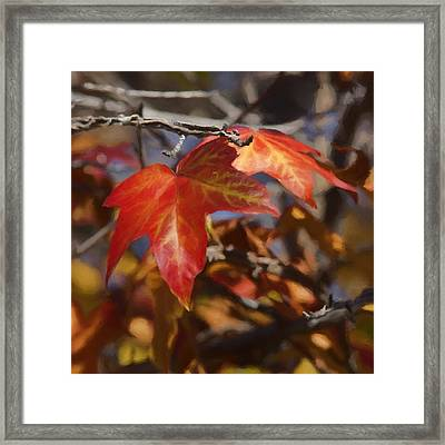 Colors Of The Sycamore Framed Print by Ernie Echols