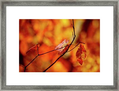 Framed Print featuring the photograph Colors by Robert Geary