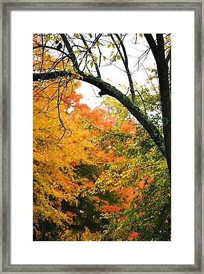 Colors That I See Framed Print by Trudi Southerland