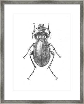 Colosma Beetle Framed Print
