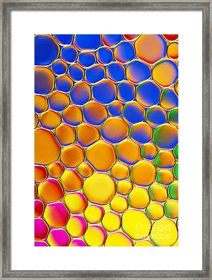 Colour Me Happy Framed Print by Tim Gainey