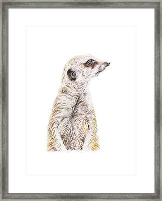 Colour Meerkat Framed Print
