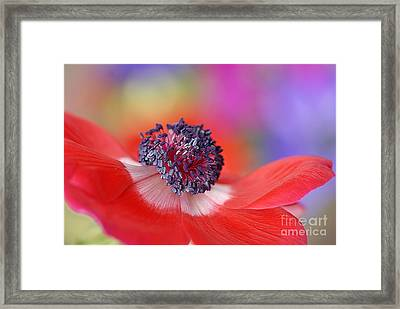Colour My World Framed Print by Jacky Parker