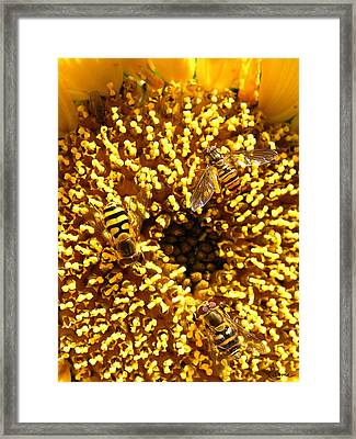 Colour Of Honey Framed Print