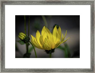 Colour Of Sun Framed Print