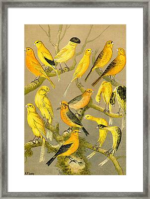 Colour Plate From The Boy's Own Paper, 1891 Framed Print