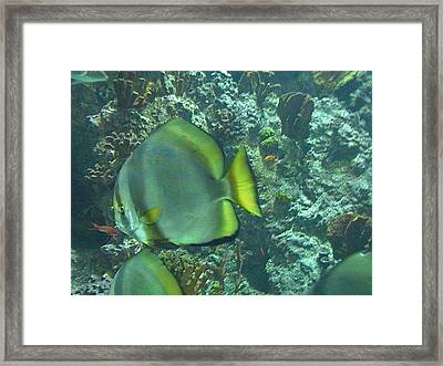 Coloured Fish Framed Print by Carlo Artemi