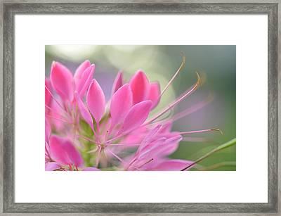 Colourful Greeting II Framed Print