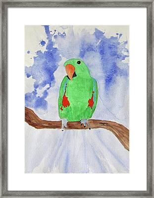 Female Parrot Framed Print