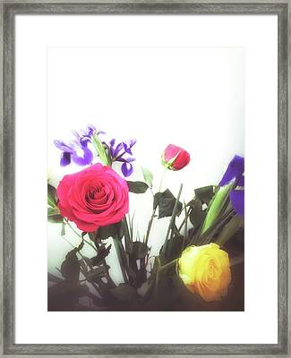 Colourful Roses Framed Print by Tom Gowanlock