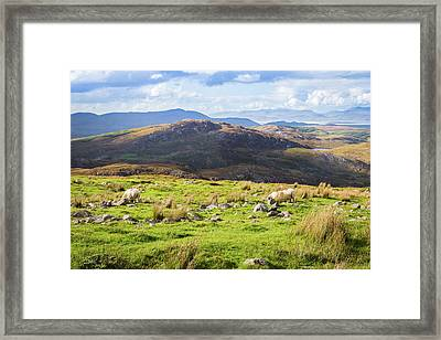 Framed Print featuring the photograph Colourful Undulating Irish Landscape In Kerry With Grazing Sheep by Semmick Photo