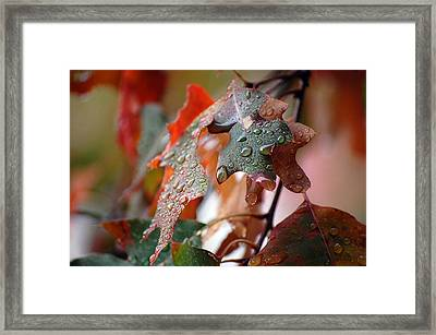 Colours Of Fall I Framed Print