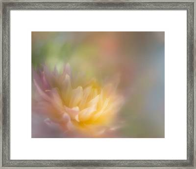 Colours Of Softness Framed Print