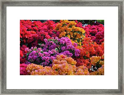 Colours Of Spring. Framed Print by Nhi Ho Thi Xuan