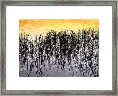 Colours Of Summer Framed Print by Stan Wojtaszek