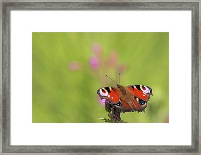 Colours Of Summer Framed Print
