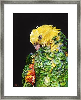 Colours Of The Jungle - Yellow-headed Amazon Framed Print by Elena Kolotusha