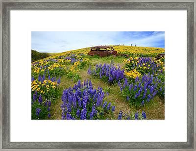 Columbia Hills Wildflowers Framed Print