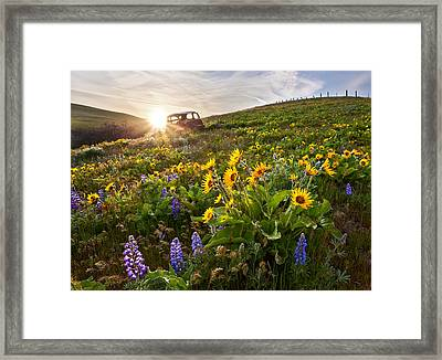 Columbia Hills Wildflowers Framed Print by Thorsten Scheuermann