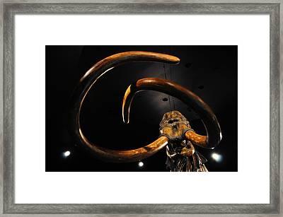 Columbian Mammoth La Brea Tar Pits Framed Print