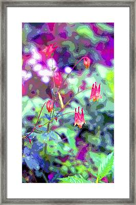 Columbine Aquilegia Canadensis Image Framed Print by Paul Price