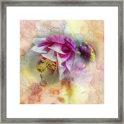 Columbine Blossom In Magenta And White #1 Framed Print by Mother Nature