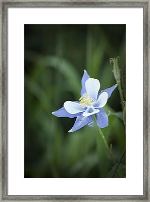 Framed Print featuring the photograph Columbine by Daniel Hebard