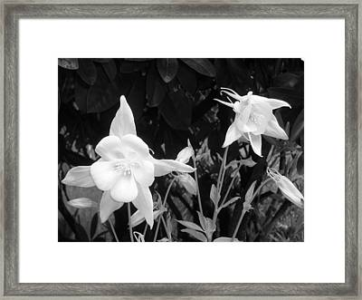 Columbine Framed Print