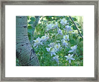 Columbine Meadow Framed Print
