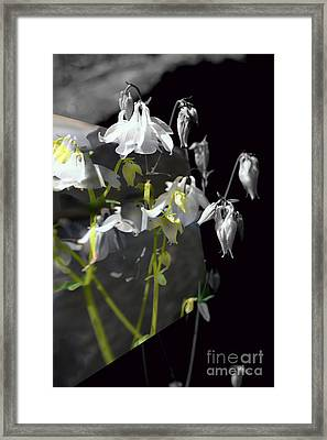 Columbine Shades Of Grey Framed Print