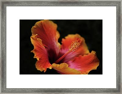 Combustion Framed Print by Connie Handscomb
