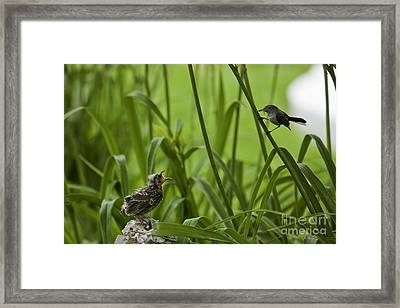 Come A Little Closer 4 Framed Print by E Mac MacKay