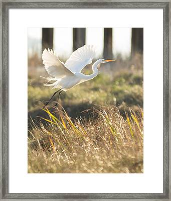 Framed Print featuring the photograph Come Fly With Me by Julie Andel