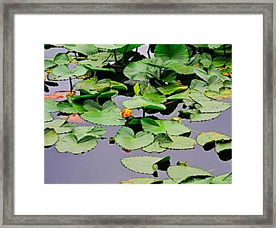 Hey Come On Over To My Pad Framed Print by Tim Coleman