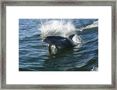 Come Play Framed Print by Tara Moorman Photography
