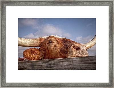 Come Play With Me Framed Print by Linda Unger