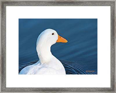 Come Swim With Me Framed Print