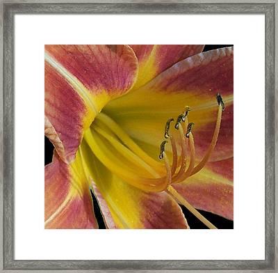 Come To Me Framed Print by Vijay Sharon Govender