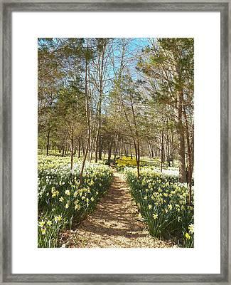 Come Walk Among The Daffodils Framed Print
